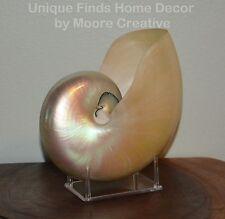 "7.0"" - 7.5"" White Nautilus Shell with Stand Whole Beach Seashell, Nautilus Shell"