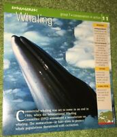 Endangered Species Animal Card-Conservation In Action-Whaling #11