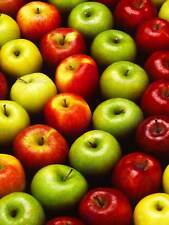 PHOTO APPLE FRUIT RED GREEN FOOD POSTER ART PRINT HOME PICTURE BB243B