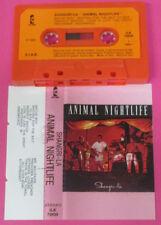 MC SHANGRI-LA Animal nightlife 1985 ISLAND Italy no cd lp vhs dvd