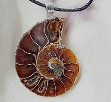 Silber Kettenanhänger Ammonit Schnecke Groß Braun Anhänger 3,5 Ammolit Perlmutt