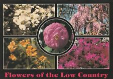 """*Flower Postcard-""""Various...Flowers of The Low Country"""""""