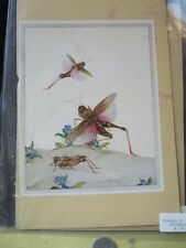 Vintage Print,TIPPED IN GRASSHOPPERS,Edward J.Detmold