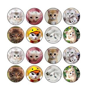 24x Cute Kittens Cats Edible Cupcake Toppers Images Wafer Paper Disc 4cm (uncut)