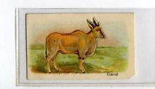 (Jb1873-100)  HUSTLER,ANIMALS 3RD SERIES,ELAND,1925#10