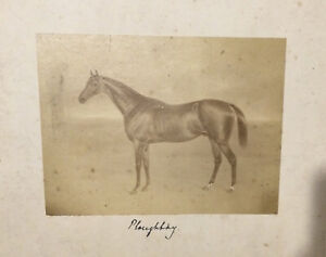 Racehorse - Ploughboy - original mounted photograph c1880.