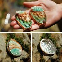 Natürliche Muschel Abalone Muschel Aquarium Landschaft Decor Handmade DIY A8Y3