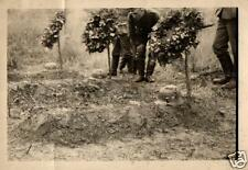 4315/ Originalfoto 7x10cm, Deutsche Soldatengräber bei Mogilev