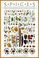 SPICES AND CULINARY HERBS by Ziegler & Keating Cooking Kitchen Food Poster