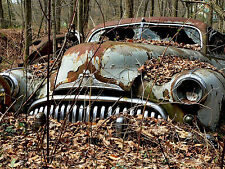 1948 Buick being swallowed by the woods in junk yard 8 x 10 Photograph