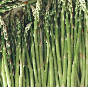 6-Pack Asparagus Live Plant Plugs, (NOT JUST CROWNS) Mary Washington FREE SHPNG