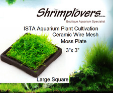 "ISTA Moss Culivation Ceramic Mesh Large Square 3""x 3"", Moss Plate"