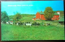 Vintage Postcard Greetings From Cokato, Minnesota - Cows Fields, Grass