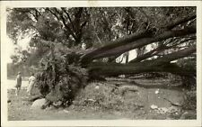 Wakefield MA 1936 Storm Toppled Tree Real Photo Postcard