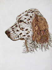 Geoffrey Lasko - English Setter Dog - Listed Artist Etching - S&N - Free Ship Us