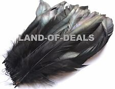 Long Black rooster feather coque tail feathers iridescent black 9.5-12 in long