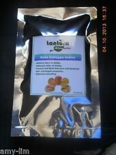 Tantora Nano Catappa Leaves (15 pieces) - food & conditioner for Dwarf Shrimps
