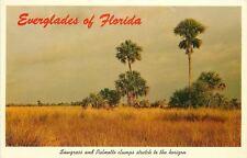 Florida Everglades~Sawgrass And Palmetto Clumps~Trees~1964 Postcard