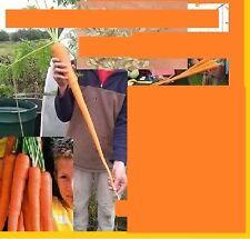 25x Big Karotten Samen Big Imperator Riesen Selten Gemüsesamen essbar Neu #72