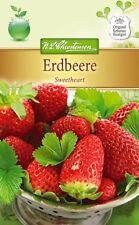 "Chrestensen Erdbeere "" Sweetheart "" Samen für ca. 50 Pflanzen  Erdbeeren    4238"