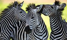 VLIES Fototapete-ZEBRAS-(3624)-Tiere Afrika Pferde Berge Steppe Esel Savanne