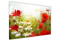 LARGE CANVAS WALL ART PRINTS RED WHITE DAISY FIELD PICTURES / FLOWER DECORATION