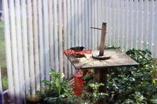 PHOTO  BIRD TABLE CAUSEWAY CROSSING 1997