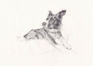Pet Portrait Original Custom Animal Art Pencil Drawing on Paper Dog Cat Horse