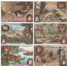 "Liebig Bilder Serie 878 ""Das Katzengeschlecht"" Deutsch"