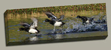 Scaup Take Flight 7018  Gallery Wrapped Canvas Wildfowl Photos by Charlie Bates