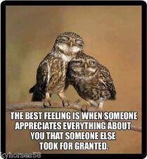 Owl Humor The Best Feeling Refrigerator Magnet