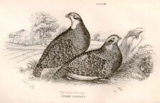 Bechstein's Caged Birds Engraving -1857- PARTRIDGE