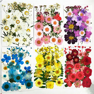 Pressed Flowers Dried Flower Resin Mold Fillings Nail Arts Pressed Flowers DIY