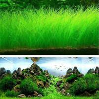 1 Bag Hoja Acuario Acuático Agua Planta Semilla Decor Para Pescado Tanque