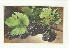 137905 stupenda cartolina artistica frutta di s. bonelli