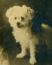 1920 cute white puppy w/ ironic unfortunate RACIST NAME; real photo card; DOGS