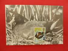 timbre 1° jour wildfowl trust - moorhen - 16/01/1980 - 13 p.