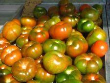 TOMATO RAF (20 SEEDS) Delicious tomatoes, resistance to Fusarium!