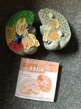Learning Resources Educational Cross-Section Human Brain Model boxed w/ manual
