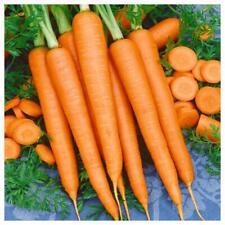 Tendersweet Carrot Seeds, Beta Carotene, Vitamin A, Non-Gmo, Free Shipping