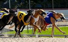 Dutching Multiple Greyhounds for Profits System