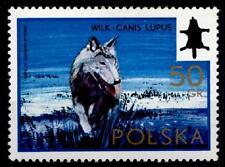 Wolf. 1W. Polen 1972