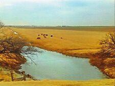 Postcard Oklahoma Yukon Cattle Grazing Canadian County MINT Unused