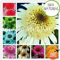 Colour Echinacea Purpurea Seeds Plants Bonsai Ratibida Coneflower Rare 100pcs