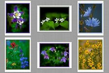 6 Wildflowers Original Photo Blank Greeting Note Cards Paintbrush Columbine
