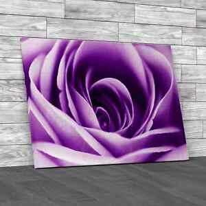 Soft Rose Petals Floral Purple Canvas Print Large Picture Wall Art