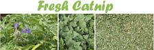 Catnip Seeds Fresh  Seeds Non GMO 50 - 100 - 200 Seeds  Free Shipping Free Ship