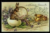 Rabbit Looks in Magnifying Glass ~Egg~Chicks~Antique~Easter Postcard-German-p999