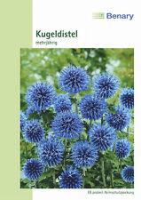SFERA Blu Cardo Cardo Echinops ritro perfezionandolo 30 piante Benary semi