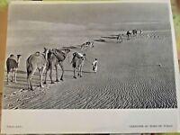 1954 Tchad  A.E.F. Caravane au Nord du Tchad Dromadaire nomade du sahara